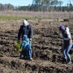 foto: Leśna Kraina sadzi las z harcerzami - 11 150x150