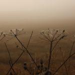 foto: Podlaskie bezdroża - wystawa fotografii Heleny Anny Romańskiej - IMG 2321 150x150