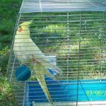 foto: Piknik Rodzinny w PSP 4 - 18767516 1936371303261016 1733611115266251131 n 150x150
