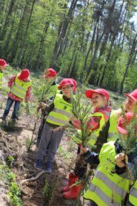 foto: Światowy Dzień Ziemi -100 drzew na 100-lecie Niepodległości - 8 200x300