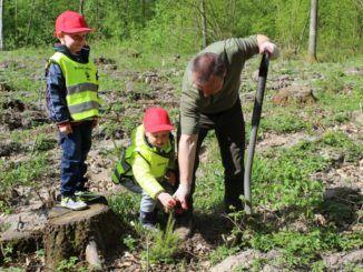 Przedszkolaki podczas sadzenia drzew