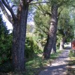 foto: Modernizacja zieleni nad Cetynią - 5B 150x150