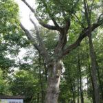 foto: Patriotyczne spotkanie przy Siwym Dębie z Leśną Krainą - IMG 0833 150x150