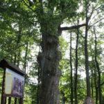 foto: Patriotyczne spotkanie przy Siwym Dębie z Leśną Krainą - IMG 0869 150x150