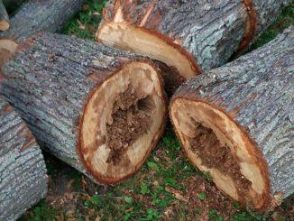 Usuwane drzewa