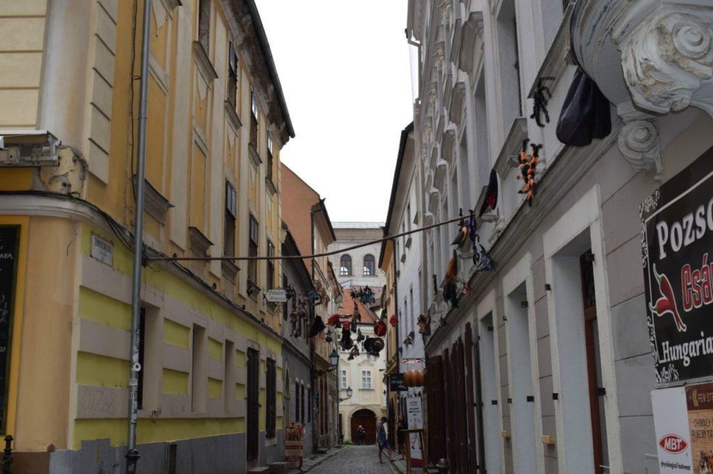 foto: Słuchacze SUTW w Wiedniu - DSC 0043 1024x682
