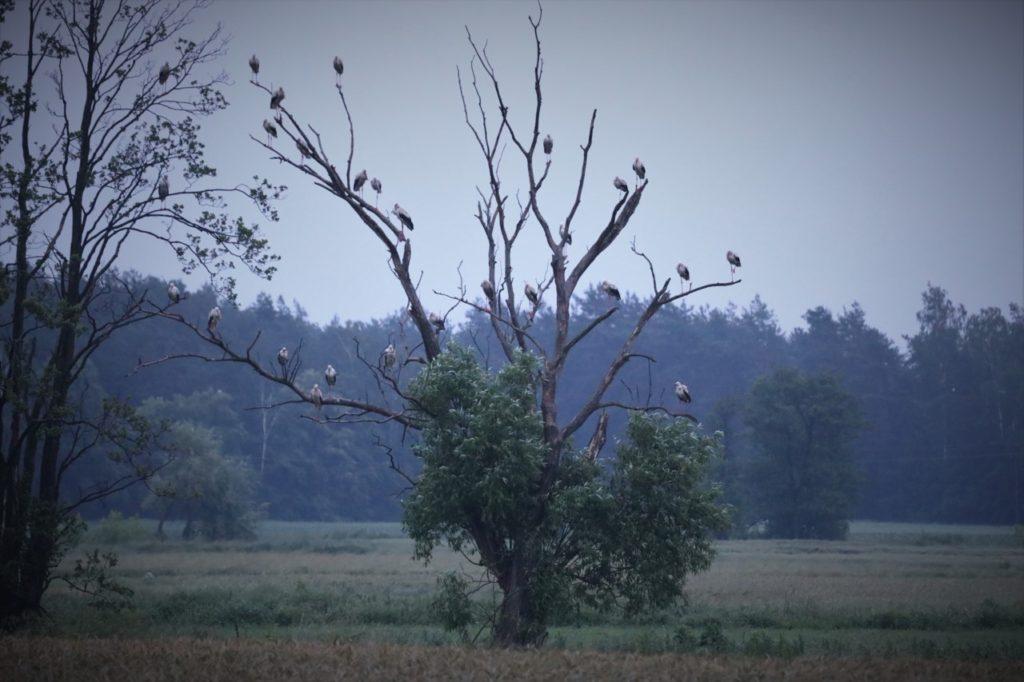 foto: Pocztówka z Podlasia - 09 2 1024x682