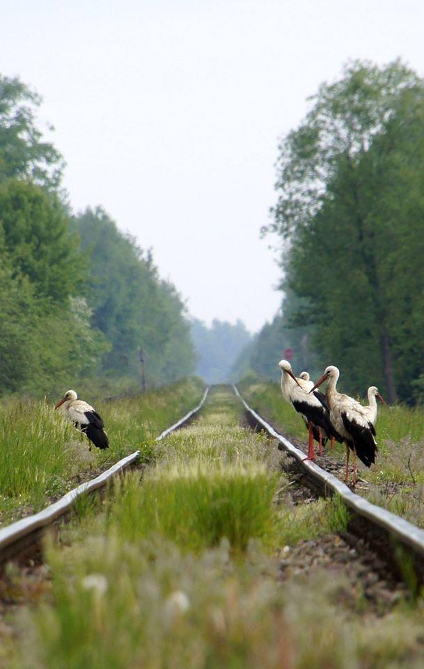 foto: Pocztówka z Podlasia - zdjęcie w galerii - 06 2
